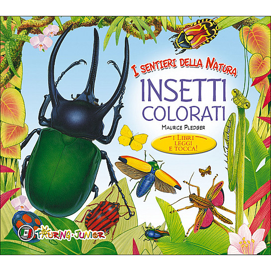 Insetti colorati